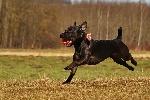 tierarzthund